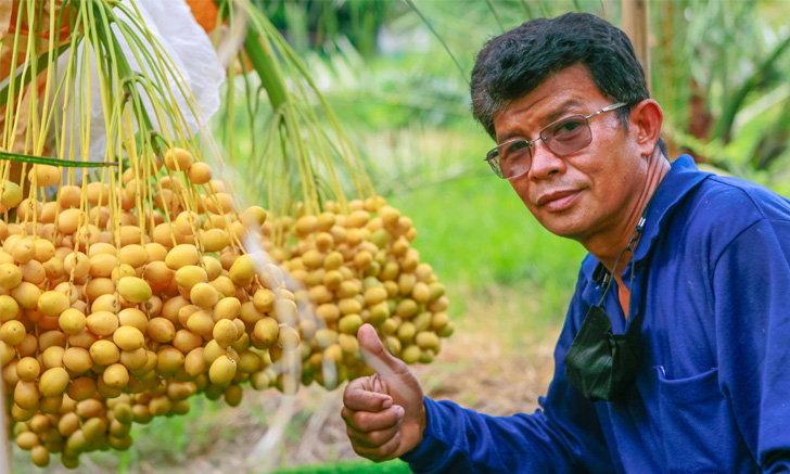หารายได้เสริม ชาวนาเปลี่ยนผืนนาเป็นสวนอินทผลัม 400 ต้น รายได้ 3 หมื่นต่อต้น