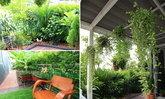 สวนในบ้านทาวน์เฮาส์แบบง่ายๆ ปลูกกันเอง จัดกันเองตามใจผู้อยู่