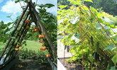 12 ไอเดียการสร้างค้างไม้เลื้อย ค้างปลูกผักสวยๆ แต่งสวนได้