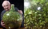 พบกับสวนขวดจำลอง 'ระบบนิเวศแบบปิด' ที่รดน้ำครั้งสุดท้ายเมื่อกว่า 46 ปีที่แล้ว