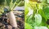 15 ผักสวนครัว ที่เหมาะสำหรับปลูกในกระถาง หรือภาชนะเล็กๆ พื้นที่แคบก็ปลูกได้