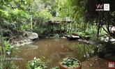 ไอเดียบ้านกลางป่าแสนอบอุ่น! พาชมบ้าน คุณรงค์ วงษ์สวรรค์ พญาอินทรีแห่งสวนอักษร