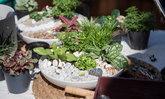 จัดสวนถาด แบบสวนขนาดเล็กสำหรับพื้นที่จำกัด