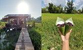 """ร่างกายต้องการสีเขียว อัปเดต """"สวนบีนัวร์"""" ทุ่งนากรีนๆ และข้าวเม่าอาหารจากธรรมชาติ"""