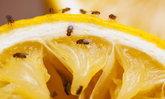สารพัดวิธีอัจฉริยะกำจัดแมลงวันได้อยู่หมัด