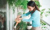 ศาสตร์แห่งฮวงจุ้ย : ต้นไม้ใดควรและไม่ควรปลูกในบริเวณบ้าน