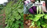 """อดีตนักจัดสวนผันตัวขาย """"ผักพื้นบ้าน"""" สร้าง """"สวนผสม"""" ปลูกผัก เลี้ยงไก่ ไม่ต้องตุนอาหาร"""