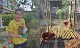 """""""นาตาลี เดวิส"""" แบ่งพื้นที่บ้านย่อมๆ เลี้ยงไก่ ได้กินไข่สมใจ"""