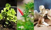 """15 ผักสวนครัวอายุสั้น ปลูกไม่กี่วัน เก็บไว้ทานช่วง """"ล็อกดาวน์"""""""