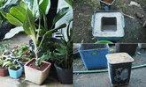 """DIY """"กระถางปูนเปลือย"""" สำหรับตกแต่งสวน สร้างความสวยงามให้มุมโปรดของคุณ"""