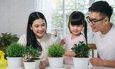 9 ต้นไม้ฟอกอากาศ ปลูกง่ายในบ้าน