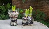 DIY กระถางดอกไม้จากโหลแก้ว เพิ่มความสดชื่นให้บ้านแสนรัก
