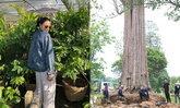 """รู้จัก """"ต้นกระบก"""" ต้นไม้ราคากว่า 4 แสนบาท ที่ """"ตั๊ก บงกช"""" ซื้อทำบุญ"""