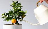 7 ต้นไม้ที่มีกลิ่นหอม เหมาะแก่การปลูกในบ้าน