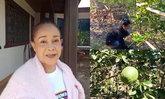 """เปิดบ้านตองห้าของ """"นกน้อย อุไรพร"""" ชมสวนมะนาวโอ และวิถีชีวิตที่เรียบง่ายของหญิงนักสู้"""