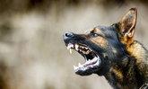 4 วิธีเลี้ยงสุนัขแบบเข้าใจ ลดความเสี่ยงพฤติกรรมก้าวร้าว