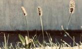 """รู้จัก """"หญ้า"""" อีกวิธีเพิ่มมิติให้สวนโดยไม่จำเป็นต้องพึ่งไม้ราคาแพง"""