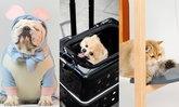 5 ไอเทมสุดคิวท์ เอาใจคนเลี้ยงสัตว์ในคอนโดให้เลือกช้อปอย่างจุใจ