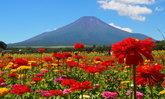 ดอกไม้ที่คนไทยรู้จักดีและสวยงามอย่างไม่น่าเชื่อกับวิธีการปลูกในญี่ปุ่น