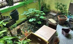 มาชมไอเดียจัดสวนขนาดเล็ก ใช้พื้นที่ไม่มาก เน้นสีสันสวยงามจากดอกไม้ ในงบประมาณสุดประหยัด