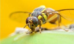 4 กับดักธรรมชาติ กำจัดเห็บ หมัด แมลงหวี่ แมลงวัน