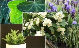 Top 5 !! พืชที่ช่วยส่งเสริมการหลับนอนที่ดี