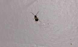 6 เทคนิคป้องกันแมลงรบกวนเวลาอยู่ในห้องพักต่างถิ่น