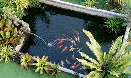 รีวิวทำบ่อปลาในสวน ที่ทั้งสวยและร่มรื่น กลางทุ่งนาบรรยากาศดีดี สวยๆ งบ 5 พันกว่าบาท
