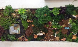 DIY Giant tray garden