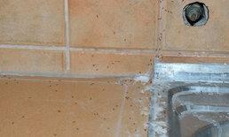 5 วิธีกำจัดมดออกจากท่อระบายน้ำ