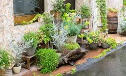 บ้านพื้นที่น้อยเก็บไว้ 5 แนวทางจัดสวนในบ้านขนาดเล็ก