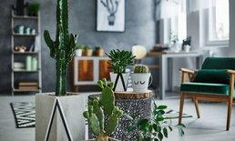 10 ต้นไม้บนโต๊ะทำงาน เลือกให้ดีช่วยคลายเครียด เพิ่มประสิทธิภาพการทำงาน