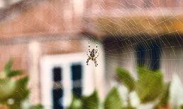 11 วิธีธรรมชาติช่วยกำจัดแมงมุมออกจากบ้าน แบบไม่ใจร้าย