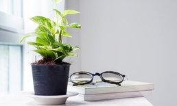 7 ต้นไม้สำหรับปลูกในบ้าน ช่วยคลายร้อน ปรับลดอุณหภูมิพร้อมขจัดมลพิษ