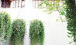 ไอเดียการจัดตกแต่งสวนด้วยกระถางแขวนเพิ่มความสวยแนวตั้งให้สวน