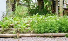 """5 เรื่องที่ต้องรู้ก่อนปลูก """"สวนผักออร์แกนิค"""" สวนผักเพื่อสุขภาพคู่ครัวเรือน"""