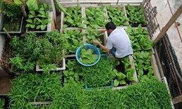 ไอเดียปลูกผักบริเวณบ้าน ผักที่ปลูกได้ทั้งปี ให้ได้ผักสดกินตลอดปี