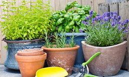 เคล็ดลับการปลูกผัก ไม้ดอก ไม้ประดับ เตรียมดินดูแลในกระถาง