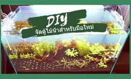 DIY จัดตู้ไม้น้ำสำหรับมือใหม่