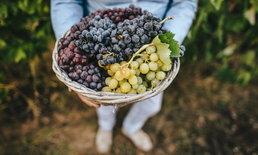 """วิธีใช้ผลไม้เป็นสัญลักษณ์เสริมเรื่อง """"ฮวงจุ้ย"""""""