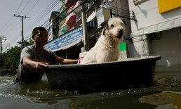 วิธีการช่วยเหลือสัตว์เลี้ยงเมื่อเกิดภัยพิบัติ