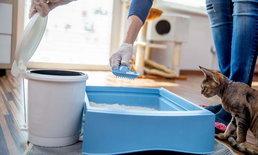 5 ขั้นตอนจัดการขยะภายในคอนโดเลี้ยงสัตว์ได้แบบง่ายๆ ทุกคนทำได้