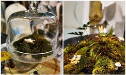 """จัด """"สวนขวดแก้ว"""" Terrarium ด้วยตัวเอง"""