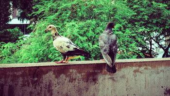 3 วิธีป้องกันนกพิราบมารบกวน เริ่มได้ตั้งแต่การเลือกและจัดห้อง