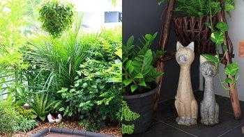 """รีวิว """"สวนในบ้านทาวน์เฮาส์"""" เป็นพื้นที่เล็กๆ นอกบ้านให้กลายเป็นมุมสดชื่น ล้อมด้วยพืชพันธุ์นานาชนิด"""