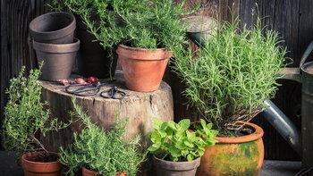 """15 สุดยอด """"พืชสรรพคุณเป็นยา"""" ปลูกไว้ใกล้บ้านรับรองประโยชน์เพียบ"""