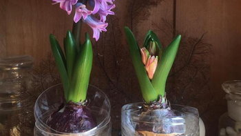 [HOW TO] นำขวดและแก้วกาแฟพลาสติกมาเลี้ยงไม้ดอกประดับบ้าน ให้เก๋ไก๋แบบง่ายๆ