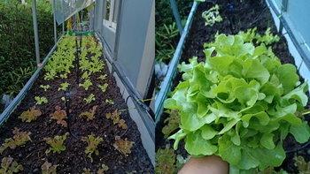 """เปลี่ยนสวนข้างบ้านให้เป็น """"แปลงผักออร์แกนิค"""" สำหรับเก็บกินเอง หรือปลูกขายเป็นรายได้เสริม"""