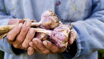 แนะนำ 11 พืชผักที่สามารถนำไปปลูกต่อได้ ทำง่ายแถมประหยัดด้วย