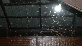 5 วิธีกำจัดแมลงเม่า ก่อนเป็นปลวกร้ายทำลายบ้าน